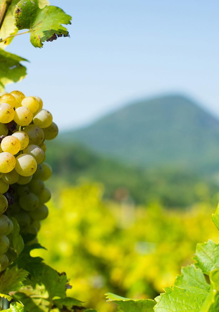 enoitalia vini vulcanici italiani